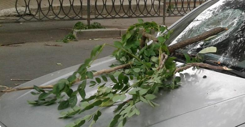 Стихия в Ростове: поломанные деревья и разбитые машины. Видео