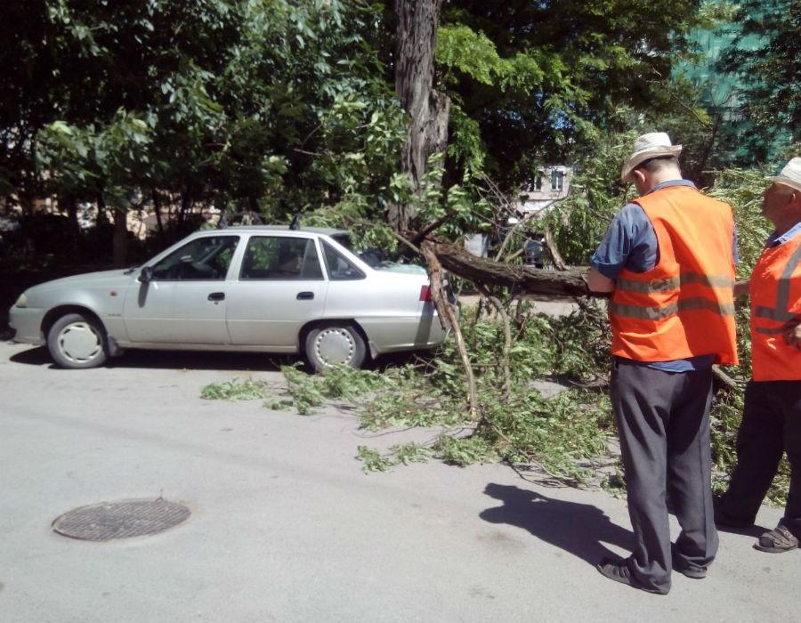 Жертва «деревопада»: как быть, если вашу машину накрыло?