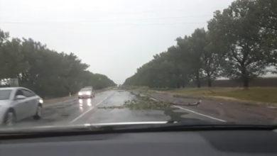 погода, деревья на дороге